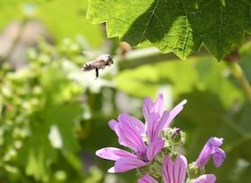 Château Palmer: little world, insects, nature, vines, biodiversity